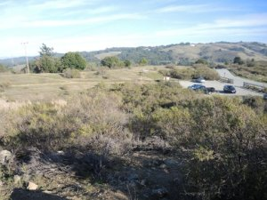 sag pond area  overed in scrub